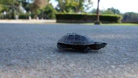 Een kleine chaperah kruipt langs de asfaltweg Concept verplichting aan het doel stock footage