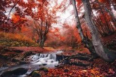 Een kleine die bergstroom, door nevelig bos met veel brieven van gevallen bladeren wordt omringd royalty-vrije stock afbeeldingen