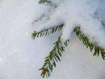 Een kleine die Kerstboom met sneeuw in de koude winter wordt behandeld stock foto's