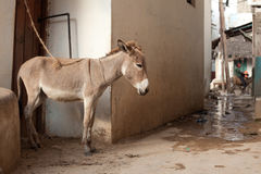 Een kleine ezel stock afbeelding