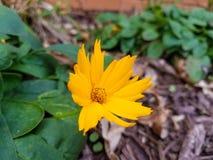 Een kleine gele bloem met het scherpe kijken vent stock foto