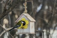 Een kleine gele mees zit op een geel vogel en eekhoornvoederhuis van triplex in het park stock foto