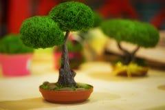 Een kleine groene boom in een pot stock afbeelding