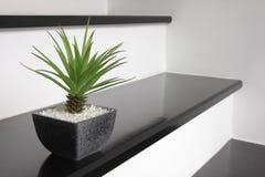 Een kleine groene installatie voor huisdecoratie Stock Foto