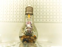 Een kleine groene organische installatiebloem groeit binnen een glas gloeilamp Concept: ecologie, bescherming van de planeet stock foto