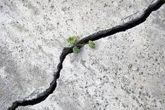 Een kleine groene spruit maakt zijn manier door een grote barst in het beton royalty-vrije stock foto