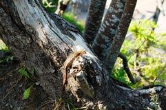 Een kleine hagedis op een gevallen boomstam Stock Foto's