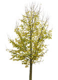 Een kleine herfstboom vector illustratie