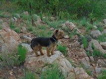 Een kleine hond bevindt zich op de rots royalty-vrije stock afbeeldingen