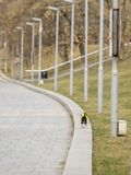 Een kleine hond die langs een verschansing langs een rij van lantaarns weglopen stock foto