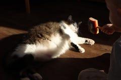 Een kleine jongen kamt een kat met een speciale korst Noors Forest Cat die van de zon genieten royalty-vrije stock fotografie