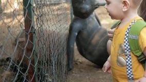 Een kleine jongen met ouders die een konijn met groen gras in een dierentuin voeden Verscheidene dieren eten stock video