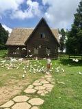 Een kleine jongens voedende duiven royalty-vrije stock foto