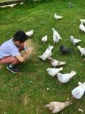Een kleine jongens voedende duiven royalty-vrije stock afbeeldingen