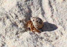 Een kleine kluizenaarkrab op wit zand Stock Foto