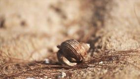 Een kleine krab bij het kruipen op zand stock footage