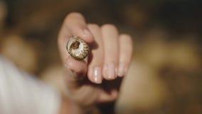 Een kleine krab die uit shell te voorschijn komt, die in de handen van een meisje wordt gehouden stock footage
