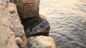 Een kleine krab op de rots Textuur van water stock video