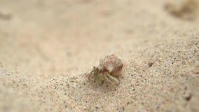 Een kleine krab reist op het witte openluchtschot van het zandstrand stock footage