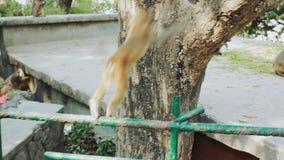 Een kleine macaque springt op een boom