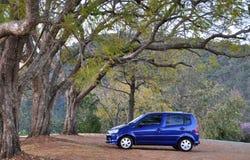 Een kleine moderne auto die onder reusachtige bomen wordt geparkeerd. Royalty-vrije Stock Afbeelding