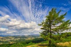Een kleine naaldboom die de Lyth-vallei en het verre meerdistrict overzien stock foto