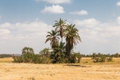 Een kleine oase in de savanne Amboseli, Kenia royalty-vrije stock afbeeldingen