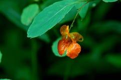 Een kleine oranje bloem onder een groen blad royalty-vrije stock afbeelding