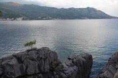 Een kleine pijnboom groeit op een rotsachtige kust stock afbeelding