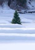 Een kleine pijnboomboom in de sneeuw. Stock Foto's