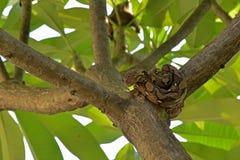Een kleine python die op een boom liggen Stock Foto