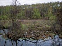 Een kleine rivier in de lente Stock Foto's