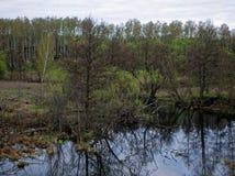 Een kleine rivier in de lente Stock Afbeelding