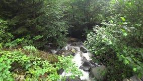 Een kleine rivier die de bergen van Gorgit-hoogland in het gebied van de Zwarte Zee van Savsat, Artvin, Turkije doornemen stock video