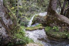Een kleine rivier diep in de bossen stock afbeelding