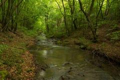 Een kleine rivier diep in de groene bossen van Bulgarije in de lente regenachtige dag stock foto