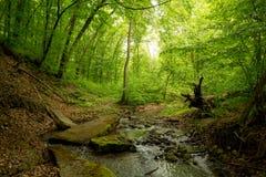 Een kleine rivier diep in de groene bossen van Bulgarije in de lente regenachtige dag royalty-vrije stock foto