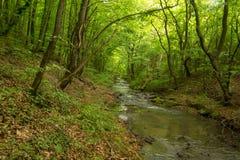 Een kleine rivier diep in de groene bossen van Bulgarije in de lente regenachtige dag royalty-vrije stock foto's