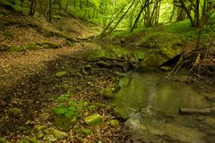 Een kleine rivier diep in de groene bossen van Bulgarije in de lente regenachtige dag stock afbeelding