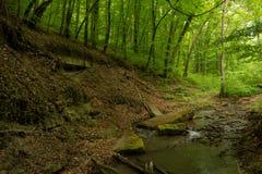 Een kleine rivier diep in de groene bossen van Bulgarije in de lente regenachtige dag royalty-vrije stock afbeeldingen