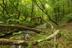 Een kleine rivier diep in de groene bossen van Bulgarije in de lente regenachtige dag stock foto's
