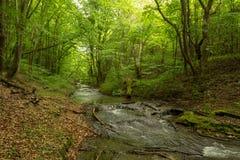 Een kleine rivier diep in de groene bossen van Bulgarije in de lente regenachtige dag stock fotografie