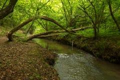 Een kleine rivier diep in de groene bossen van Bulgarije in de lente regenachtige dag stock afbeeldingen