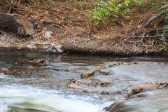 Een kleine rivier in het Nationale Park van Meru Kenia, Afrika Royalty-vrije Stock Foto's