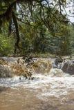 Een kleine rivier in Kakamega Forest Kenya Royalty-vrije Stock Afbeeldingen