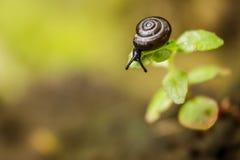 Een kleine slak op een grassprietje ziet neer eruit Stock Afbeelding