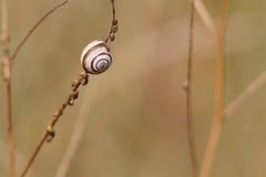 Een kleine slak op een stam Stock Fotografie