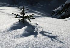 Een kleine sneeuwboom met een schaduw Stock Afbeeldingen