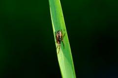 Een kleine spin Stock Afbeeldingen