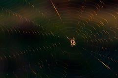 Een kleine spin zit op het Web Close-up stock foto's